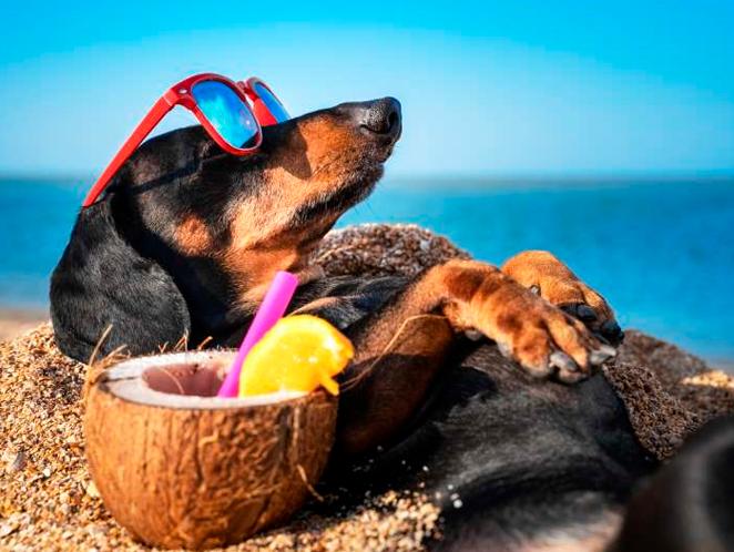 5 dicas para aproveitar as férias com seu pet