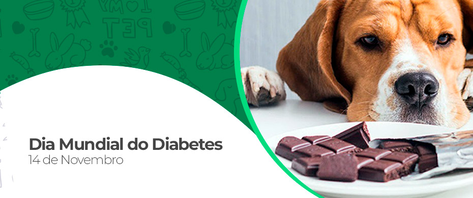 14 de Novembro Dia Mundial do Diabetes